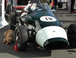 Car_and_dog